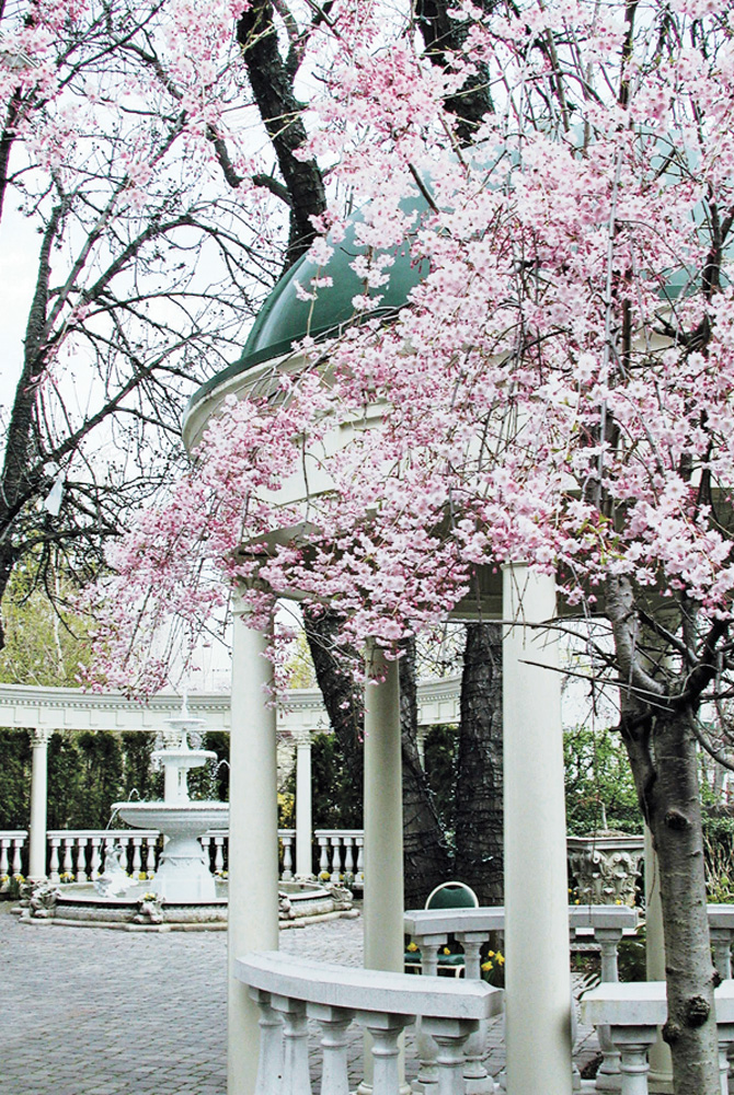 The Brownstone, Cherry Blossoms