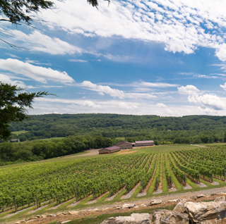 Search for Vineyard Reception Sites