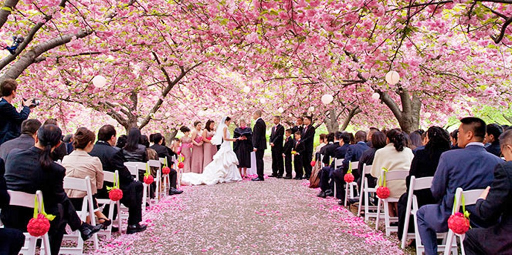 Brooklyn Botanic Garden Cherry Blossom Wedding Photo David Lindner